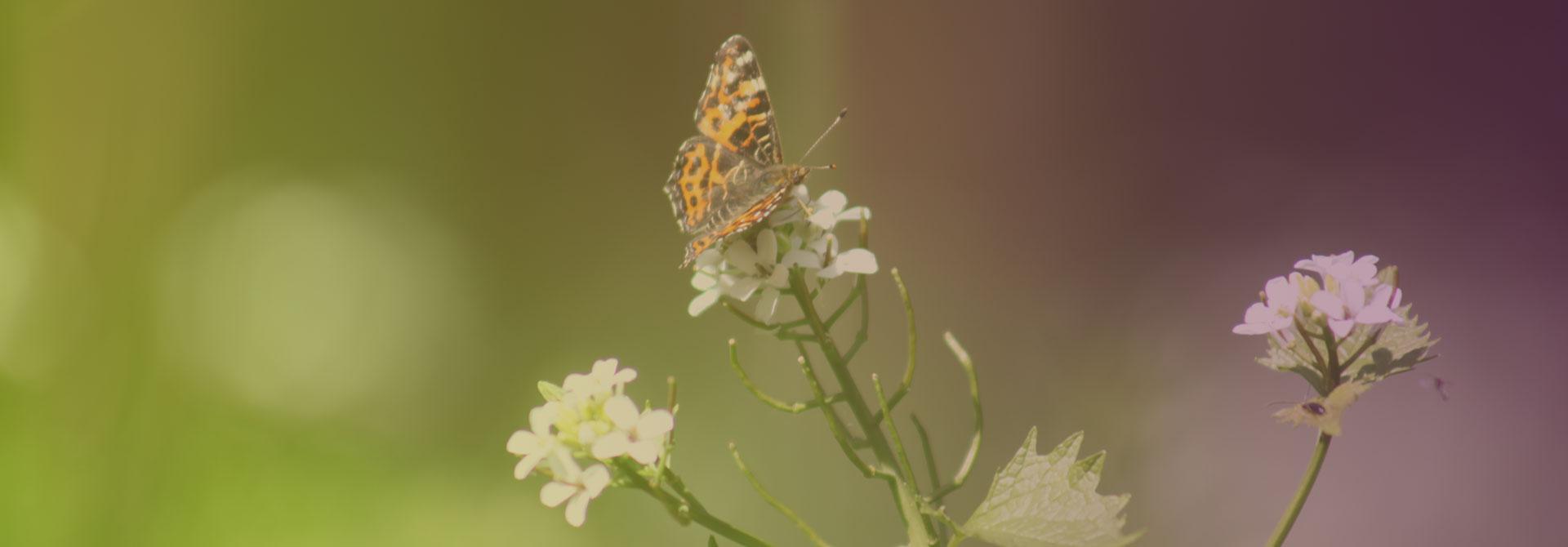 Études faunes Flores
